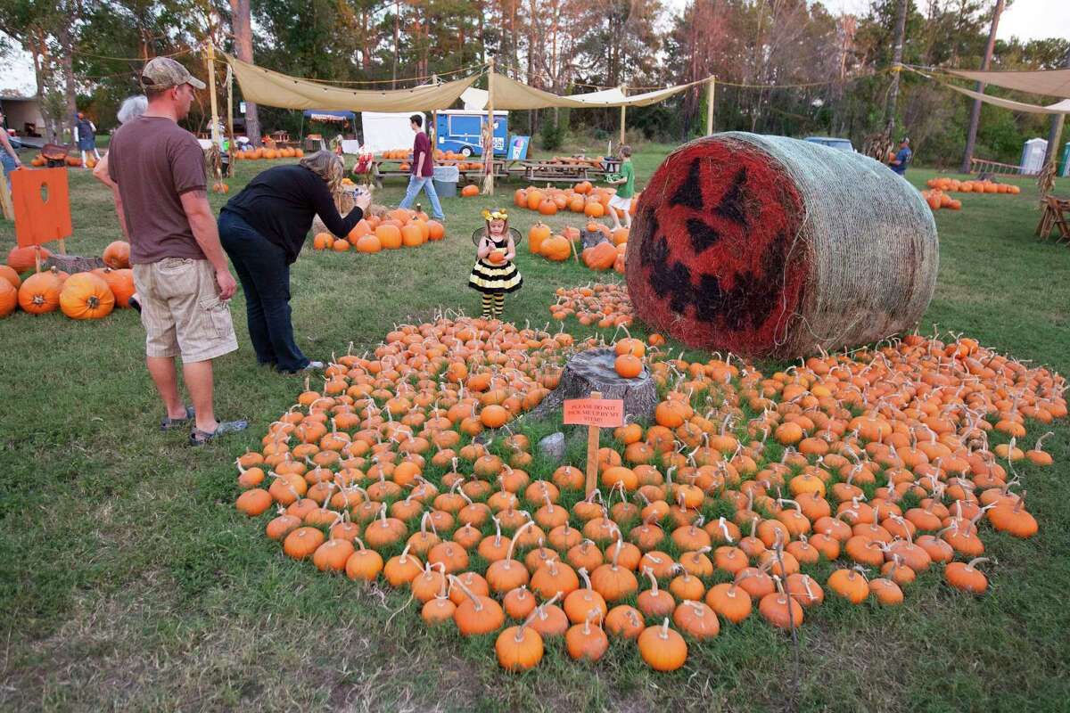 Parents take pictures of their children in the pumpkin patch at First Baptist Church in Magnolia during a previous Halloween season.
