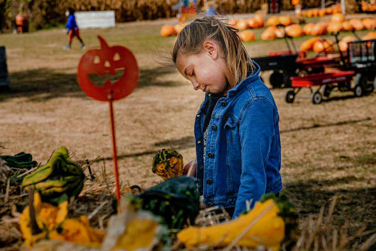 Maryville resident Alainah Pugh, daughter of Ashlee Pugh, picks out some gourds on Tuesday afternoon at Rinkel Pumpkin Farm in Glen Carbon.