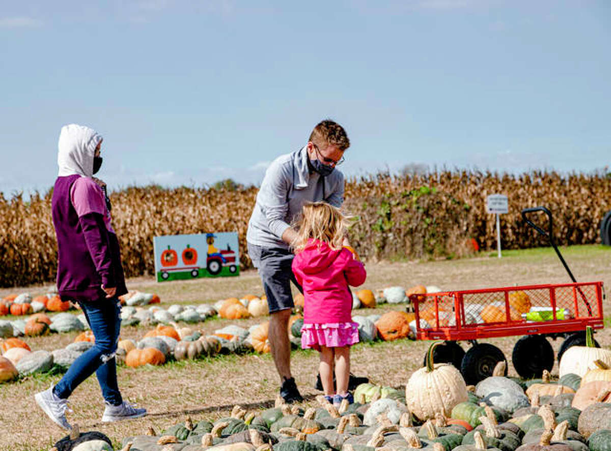 Pumpkins ripe for the picking at Rinkel Pumpkin Farm in Glen Carbon as a variety of other attractions are available.