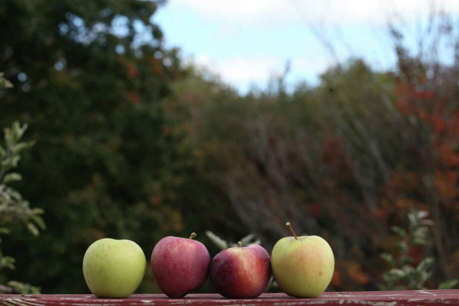Opus for Person-to-Person will hold its 'Fun on the Farm' fundraiser at Silverman's Farm in Easton, Conn. on Saturday, Oct. 24. Photo: File Photo / Connecticut Post freelance B.K. Angeletti