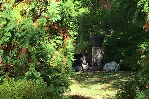 This bear paid a visit to Wellington Court and the Summerfield Gardens condominiums on Saturday, Oct. 17.