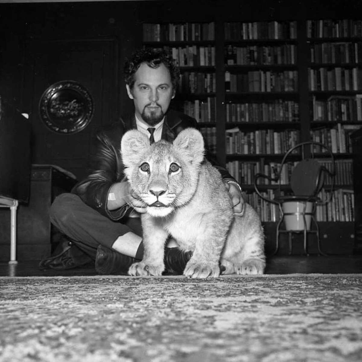 Anton Szandor LaVey and his lion cub photographed in the William Westerfeld House.