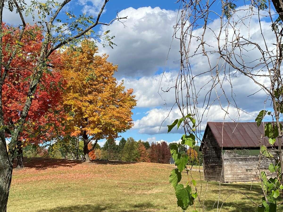 Fall has arrived in West Sand Lake by Lori McIlwaine Hammond of Niskayuna