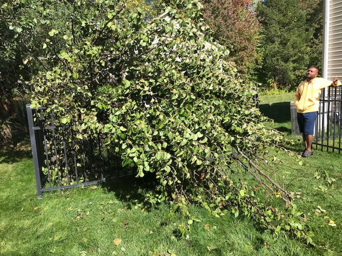 My neighbor Sumit pitched in removing the fallen tree limbs in a friendly, neighborly gesture