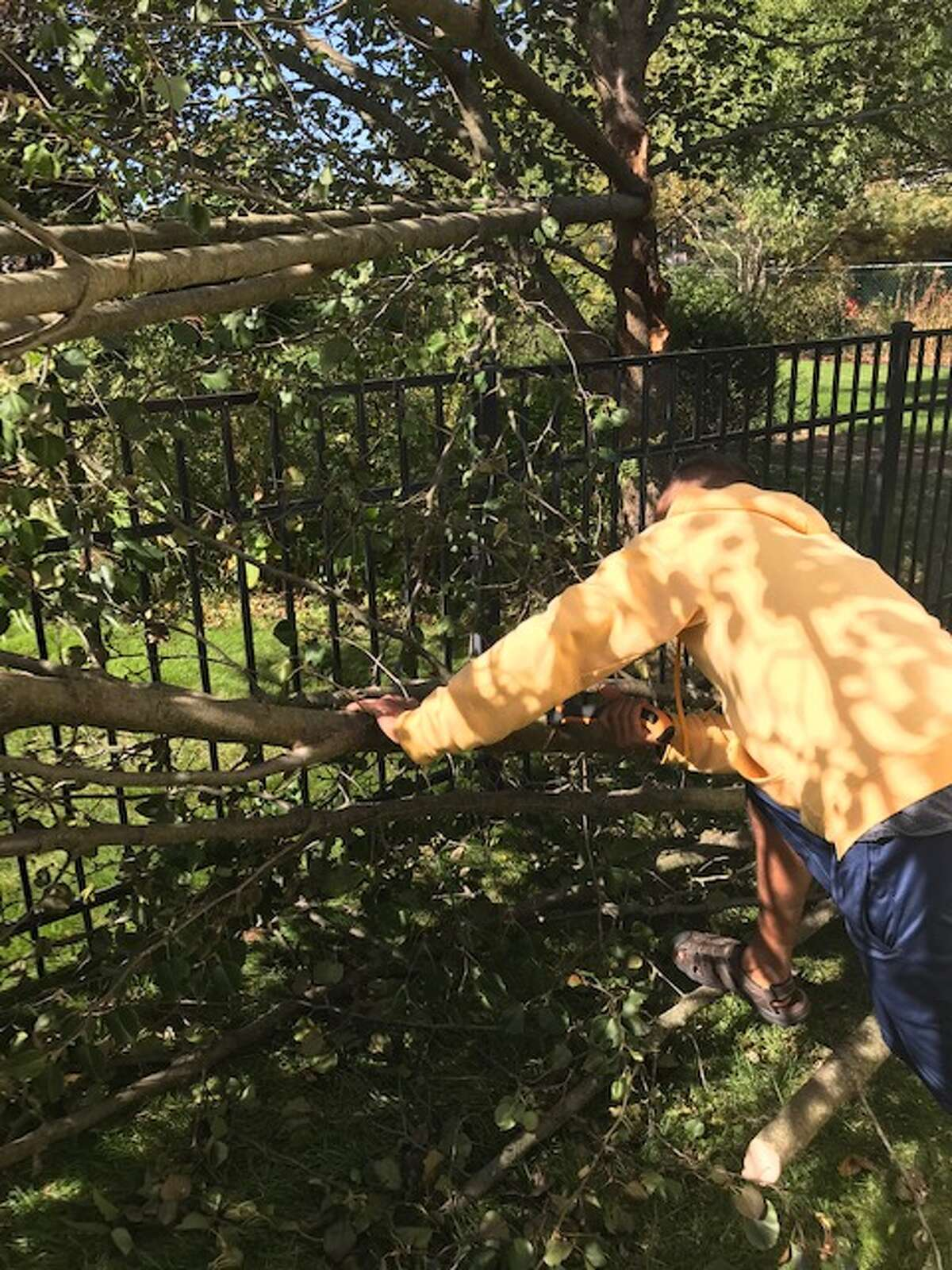 My neighbor Sumit had only a small hand saw and toiled together with his neighbor to remove the tree limbs.
