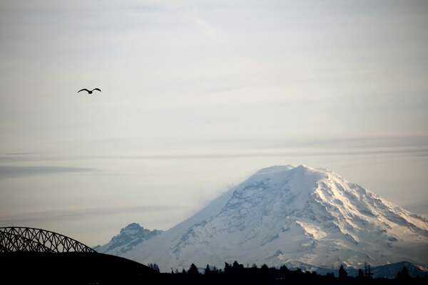 Seagull and view of Mount Rainier from downtown Seattle.