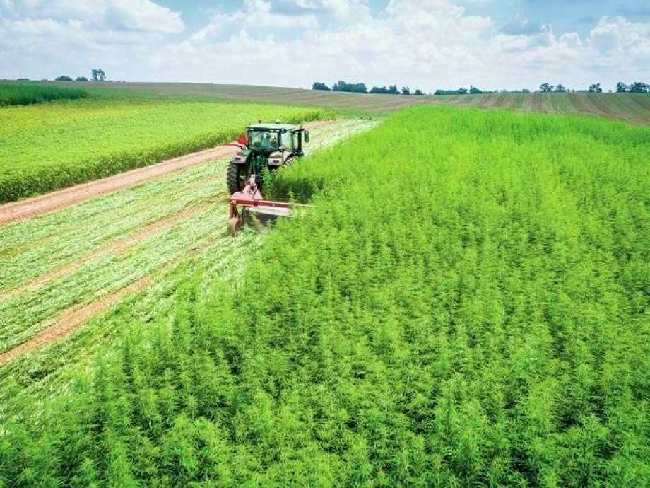 The USDA has approved Michigan's industrial hemp plan, giving the state primary oversight of its hemp operations.(Tribune File Photo)