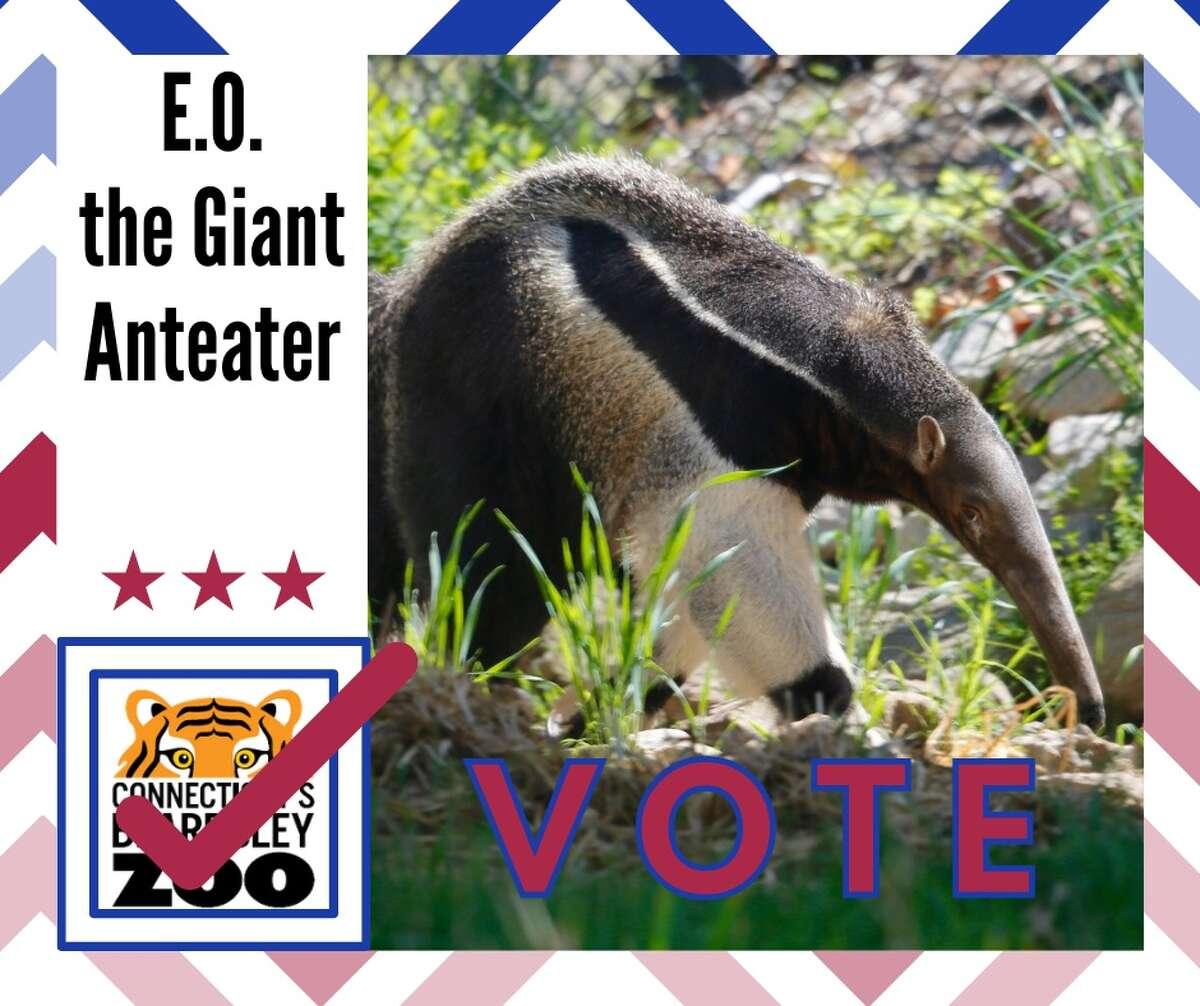 E.O. the giant anteater E.O. the Giant anteater