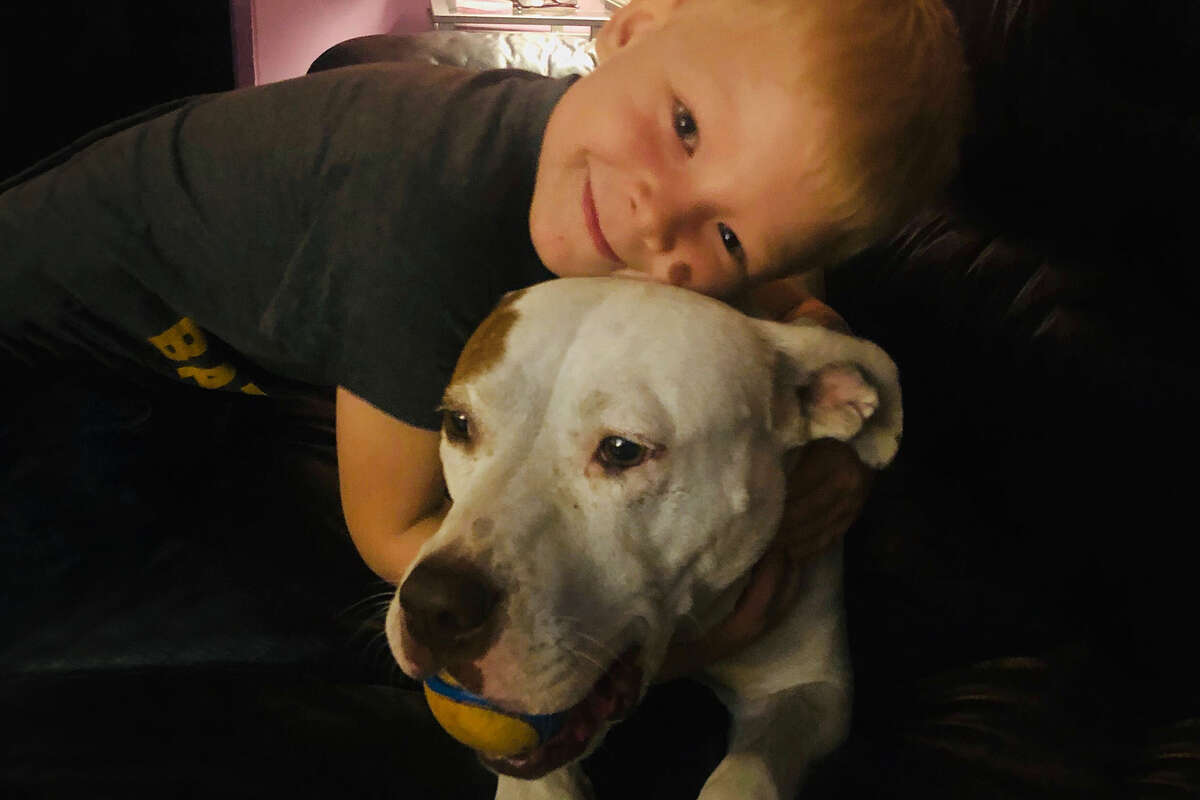 Finn and his six-year-old pit bull-mastiff mix, Chloe.