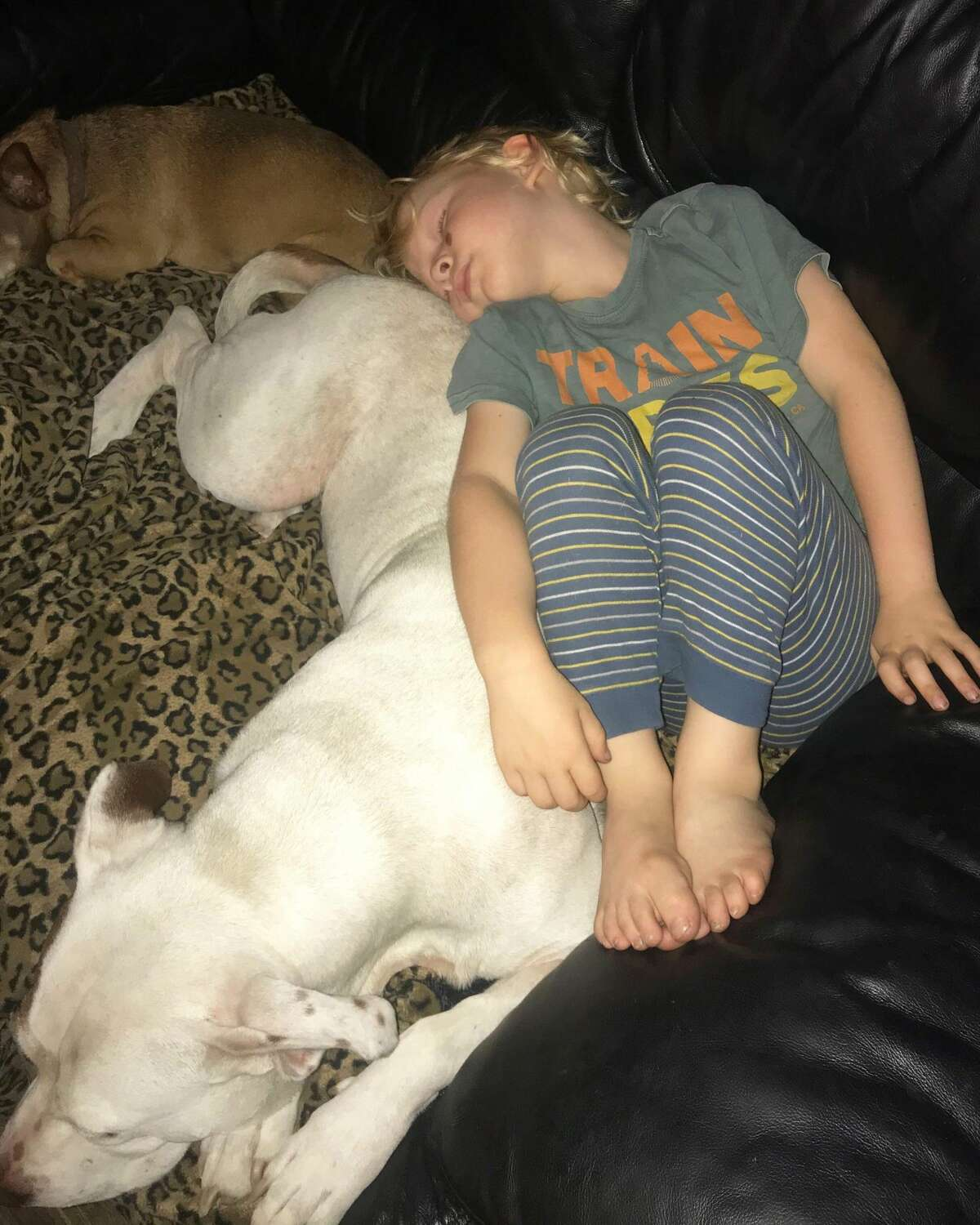 Finn entered the family shortly after Chloe did, and the two of them were inseparable, even taking naps together.