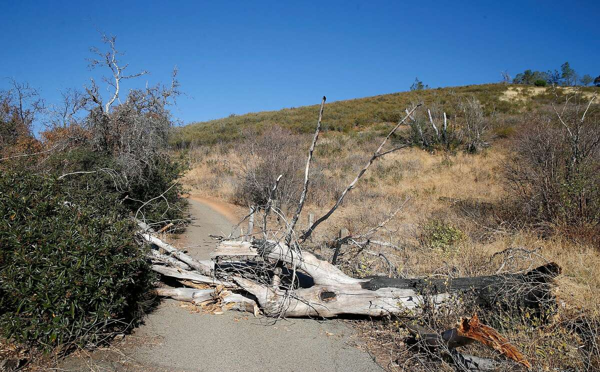 An old, downed tree blocks access to the Muir picnic area at Mount Diablo State Park in Danville on Wednesday. Very high winds are expected Sunday, creating extreme fire danger.