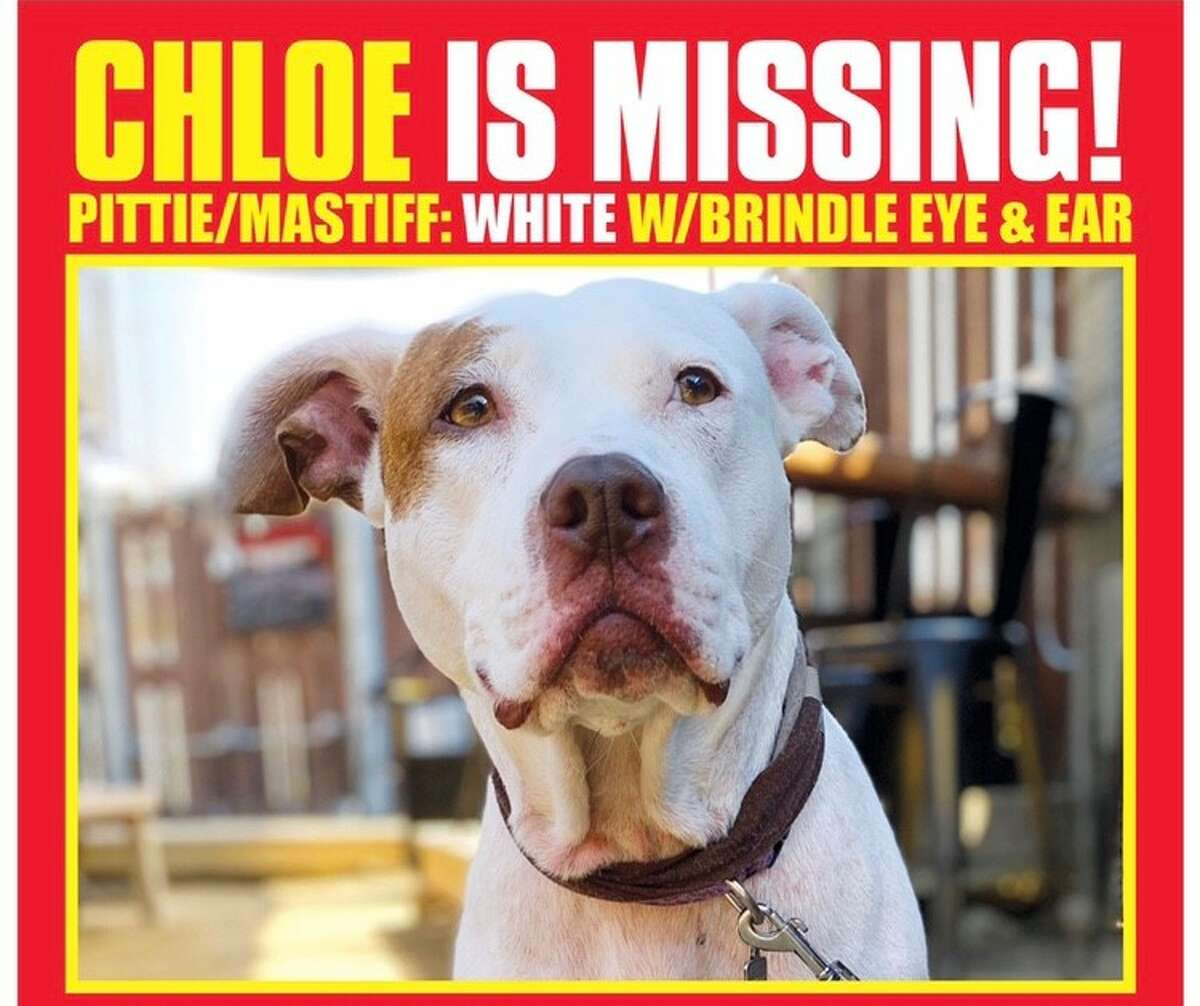 David Meade handed flyers out around Los Angeles in the effort to locate Chloe.