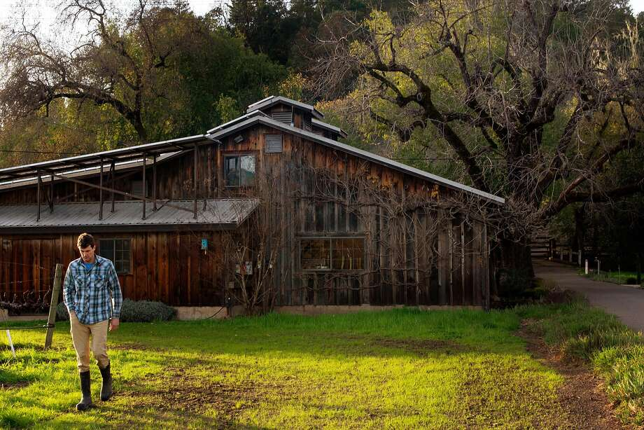 Justin Warnelius-Miller strolls near his winery at Garden Creek Vineyards in Geyserville in 2018. His family lost their crops to smoke taint in 2017 and again in 2019 but has long been in the wine business and has not considered pulling up stakes. Photo: Erik Castro / Special To The Chronicle 2018