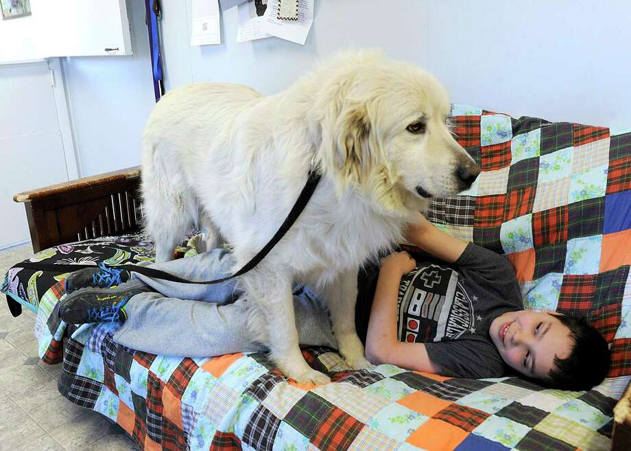 Tyler Grace, 11, spends some time with Fergus, a great pyrenees dog, available for adoption at Danbury Animal Welfare Danbury Animal Welfare, Monday, March 6, 2017. Fairfield County Giving Day is Thursday, March 9 and the Danbury Animal Welfare Society is one of the participants. Photo: Carol Kaliff / Hearst Connecticut Media / The News-Times
