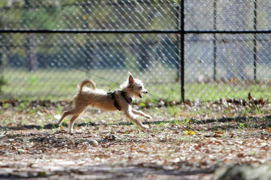The Reed City city council approved a motion to designate land for construction of a mountain bike skills track and a dog park at its meeting this week. Photo: Associated Press, File / © 2016 Houston Chronicle