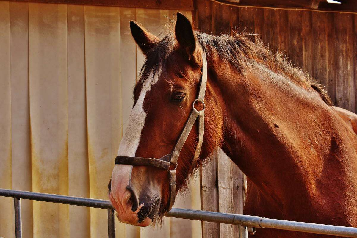Cancer is an ailment in that it can be found in nearly every species, including large animals like horses.