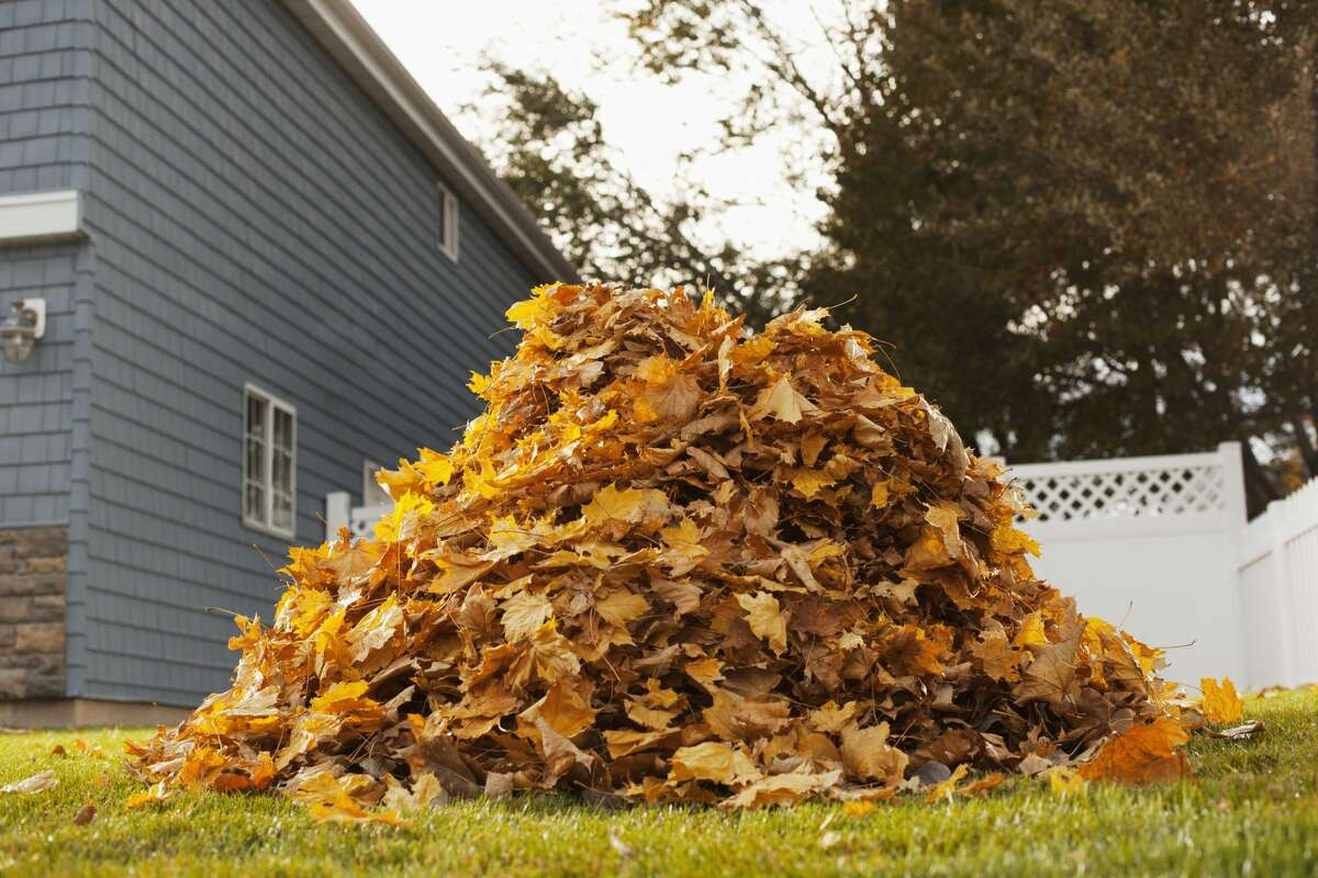 Bagged leaves will be picked up in Jacksonville each day starting Nov. 2 and continuing through the end of the month.