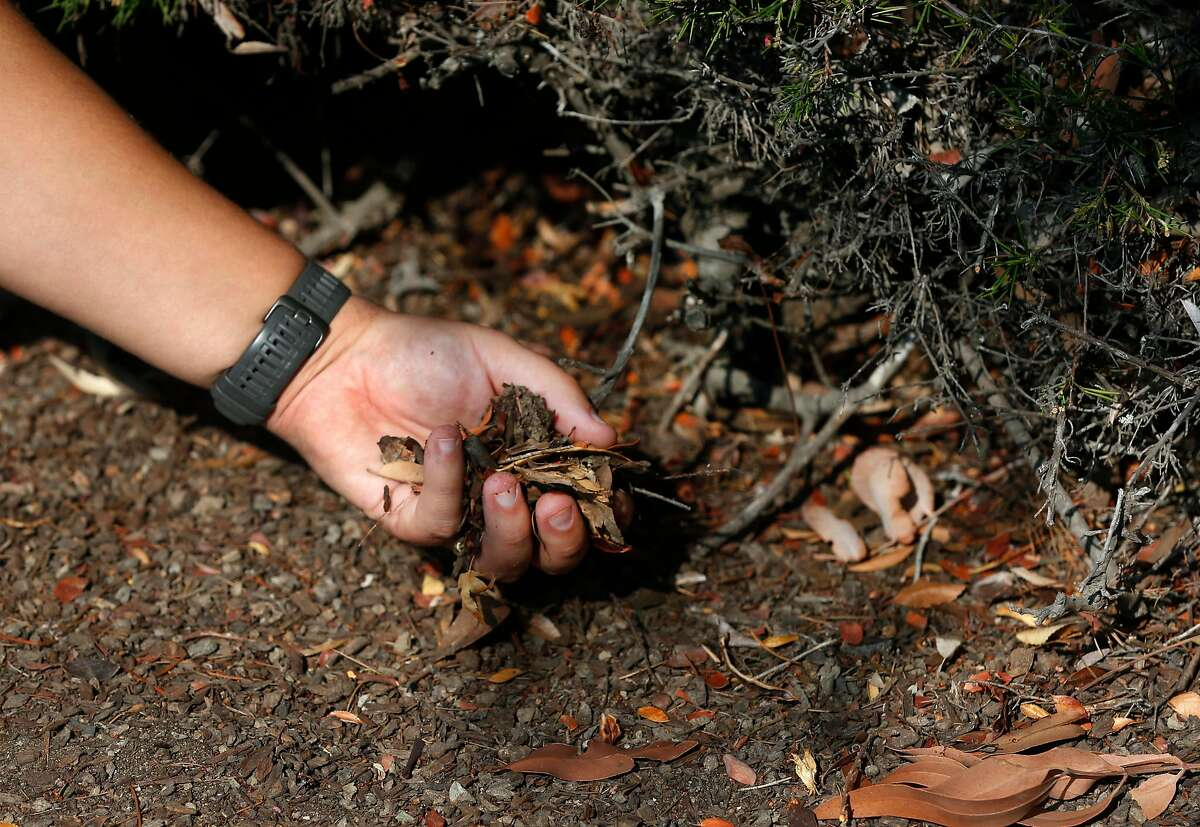 Ember Defense co-founder Devan LeBlanc holds loose ground cover, which is fuel for wildfires.