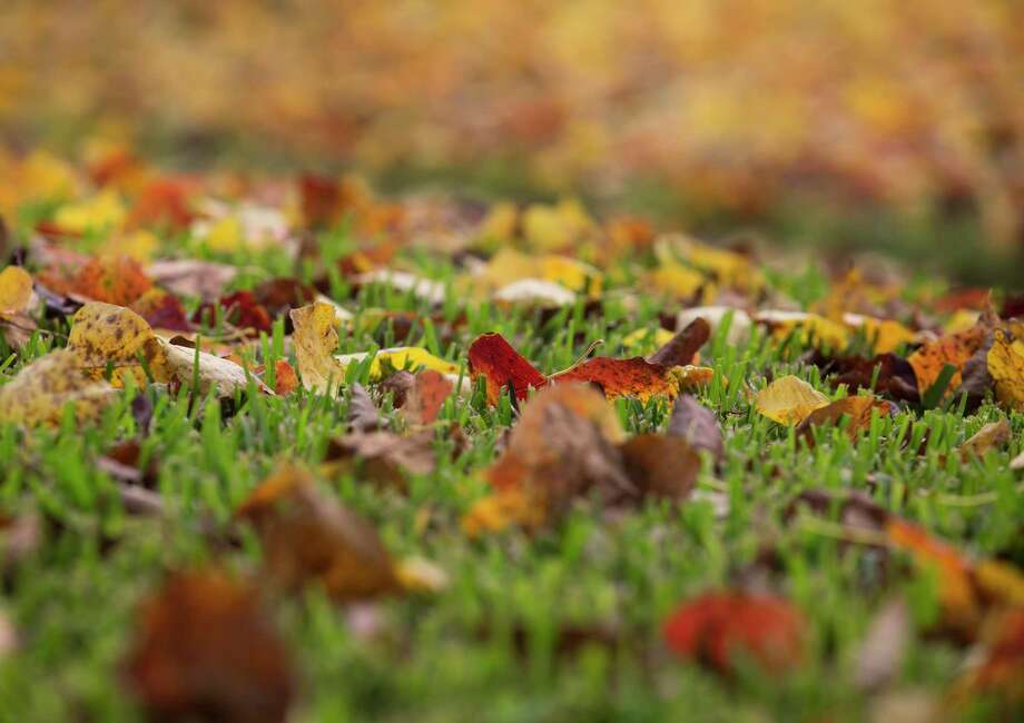 Colorful fallen leaves on Buffalo Speedway are photographed on Friday, Nov. 22, 2019, in Houston. Photo: Yi-Chin Lee, Houston Chronicle / Staff Photographer / © 2019 Houston Chronicle