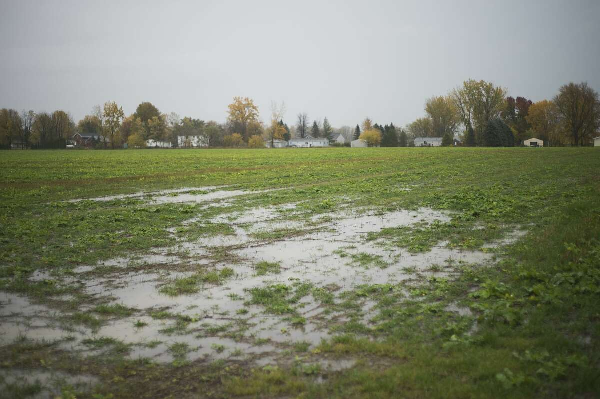 Rain water collects on a field of cover crops Friday, Oct. 23, 2020 on a farm about 10 miles north of Auburn in Bay County owned by Aron Buechlur. (Katy Kildee/kkildee@mdn.net)