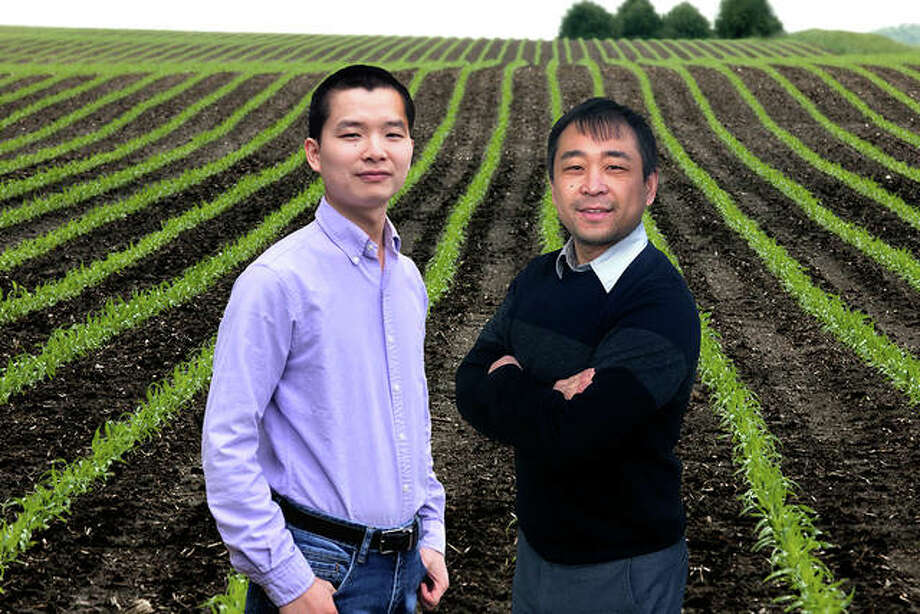 Professors Bin Peng (left) and Kaiyu Guan have joined forces to assess the efficiency of current climate modeling techniques and their ability to guide improved agricultural production strategies on a global scale under varying climate conditions. Photo: Illustration By Fred Zwicky