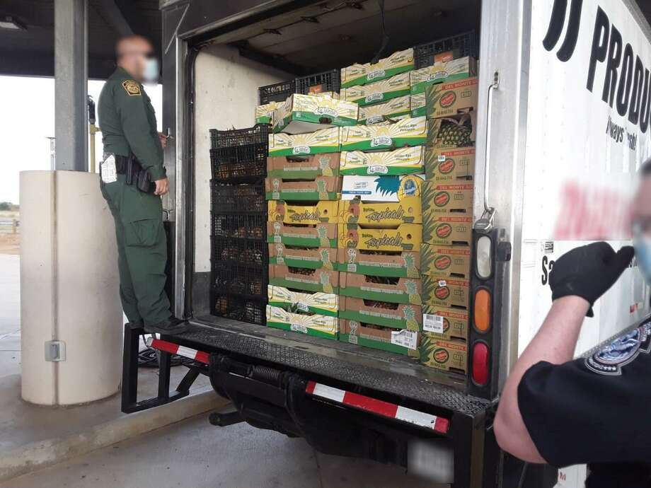 U.S. Border Patrol agents said they discovered 37 people behind this fresh produce inside a box truck. The individuals were all determined to be immigrants who had crossed the border illegally. Photo: Courtesy Photo /U.S. Border Patrol