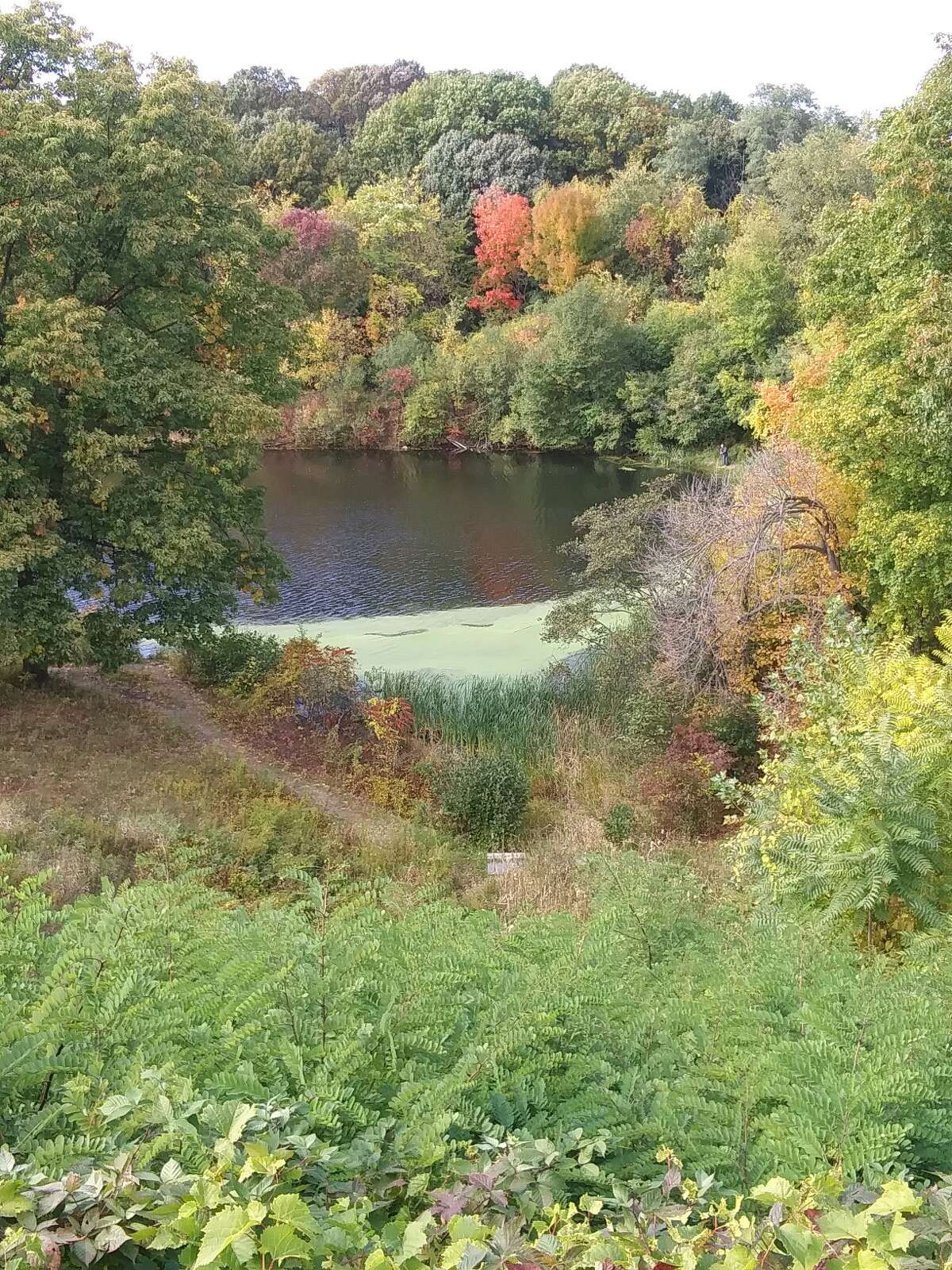 Pond in frear park troy ny. Taken 10/12 by michael galeo while biking