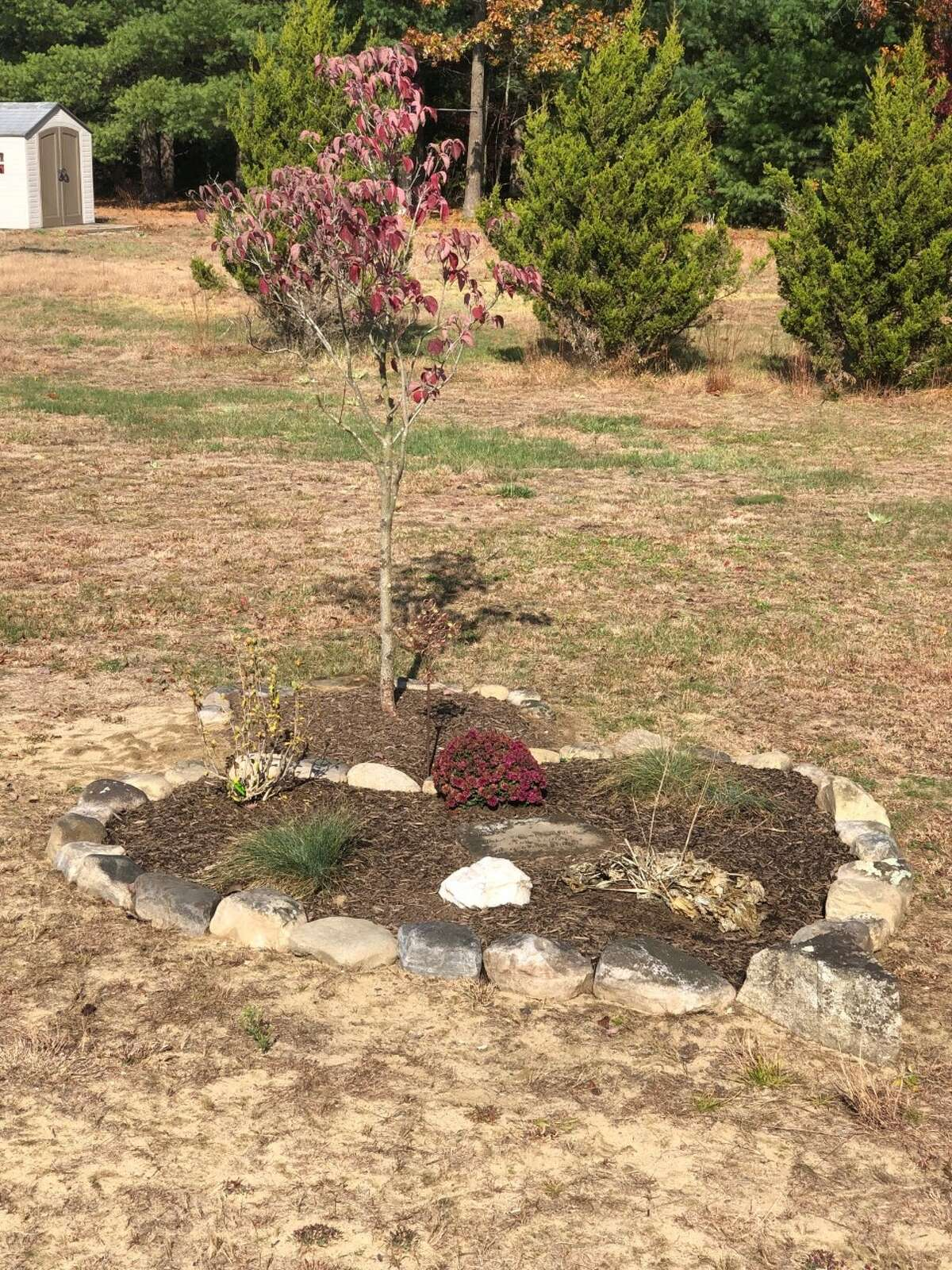A heart-shaped garden and tree planted in memory of Barbara Goodwin at the Gateway House of Peace, 479 Rowland St., Ballston Spa. The Gateway House of Peace, 479 Rowland St., Ballston Spa.