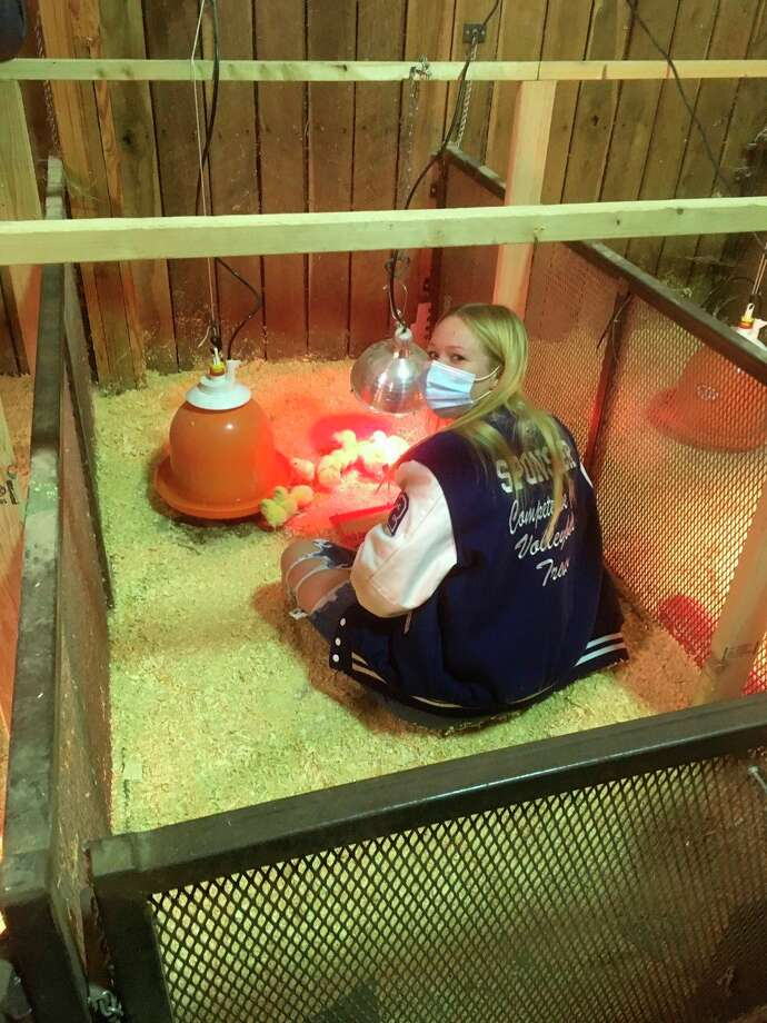 Outside of the land lab, students have been busy in the barn caring for their Broiler Chickens and Laying Hens. (Photo Provided)