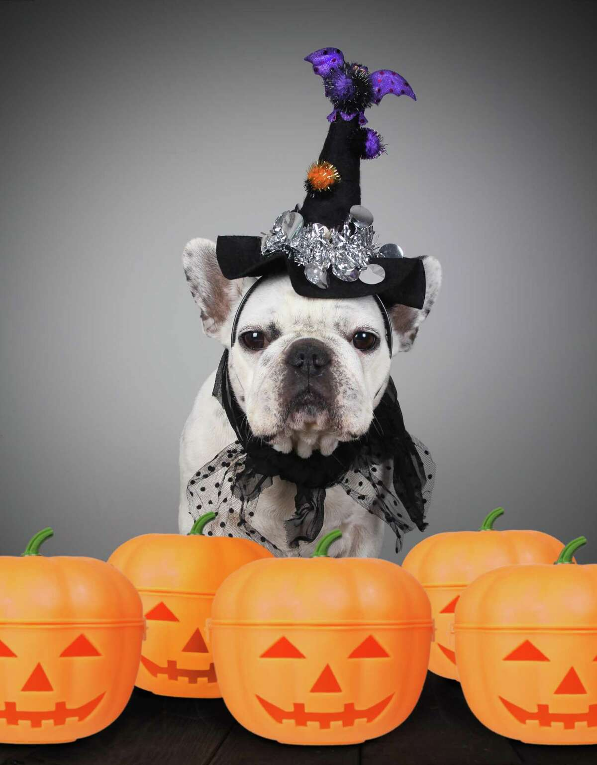 Even with Halloween changes this year, your pets still face dangers from things like ill-gotten candy and too much pumpkin.