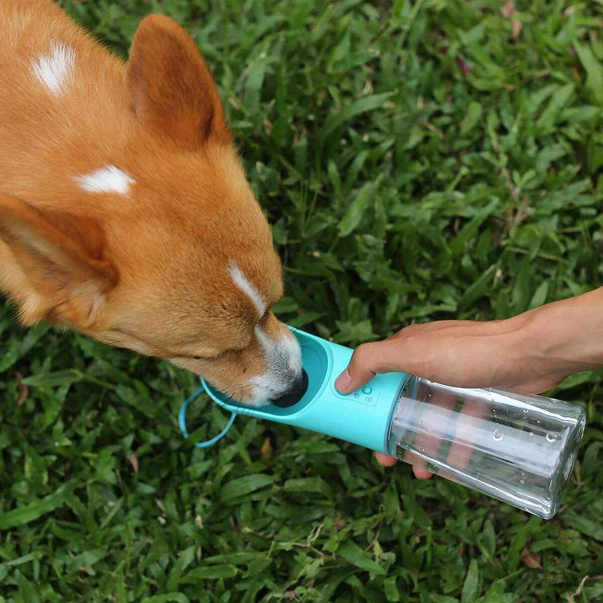 This Water Bottle Is Perfect for Pet Parents : Amazon is selling a pet water bottle that's designed to keep dogs hydrated during walks, car rides, and other activities on the go.
