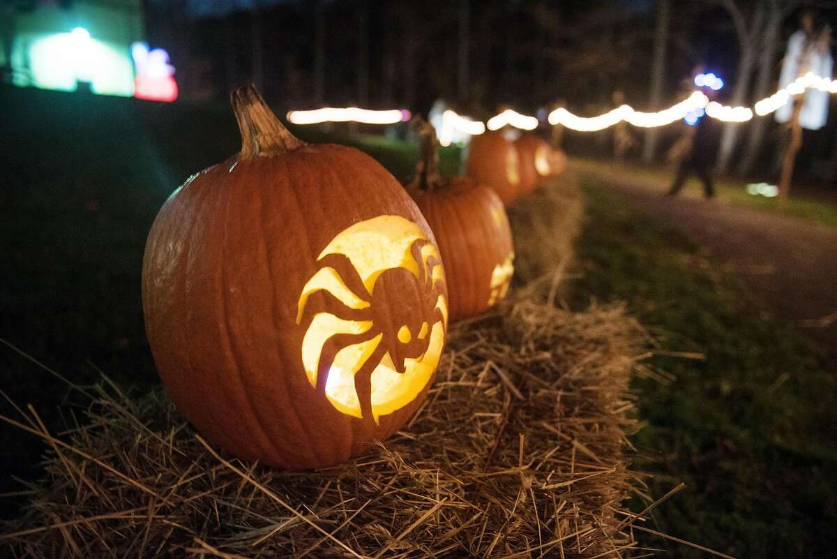 Carved jack-o-lanterns greet visitors to the Recreation Center's Pumpkin Glow Stroll in Ridgefield, Connecticut on Saturday, October 24, 2020.
