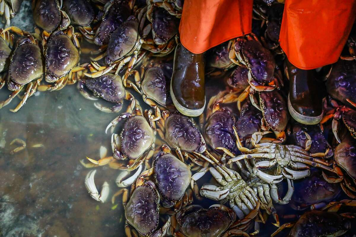 Fisherman Tyler Greene sits among a pile of Dungeness crab as they are hauled up onto Fisherman's Wharf on Pier 45 in San Francisco, California, on Sunday, Dec. 15, 2019.