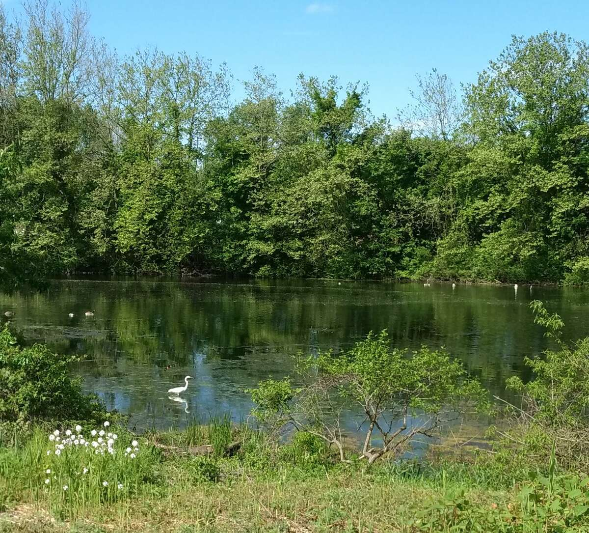 The WilWalk section of the Norwalk Valley River Trail will pass a pond at Broad Street in Norwalk. Oct. 2020