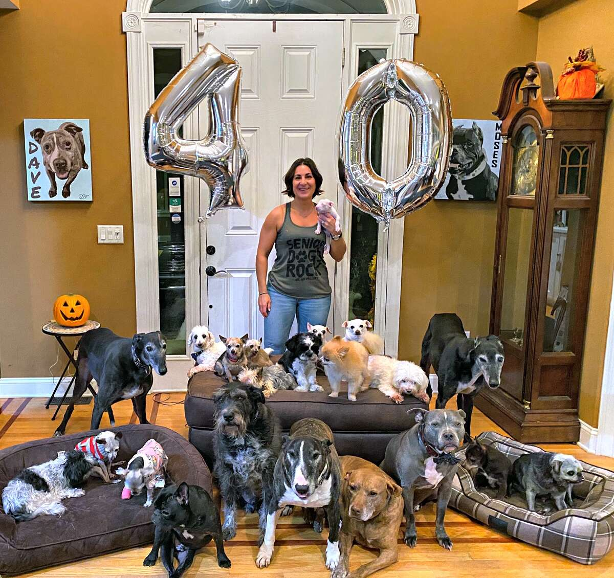 1. Our house has been the final resting place for 33 senior dogs over the last few years.