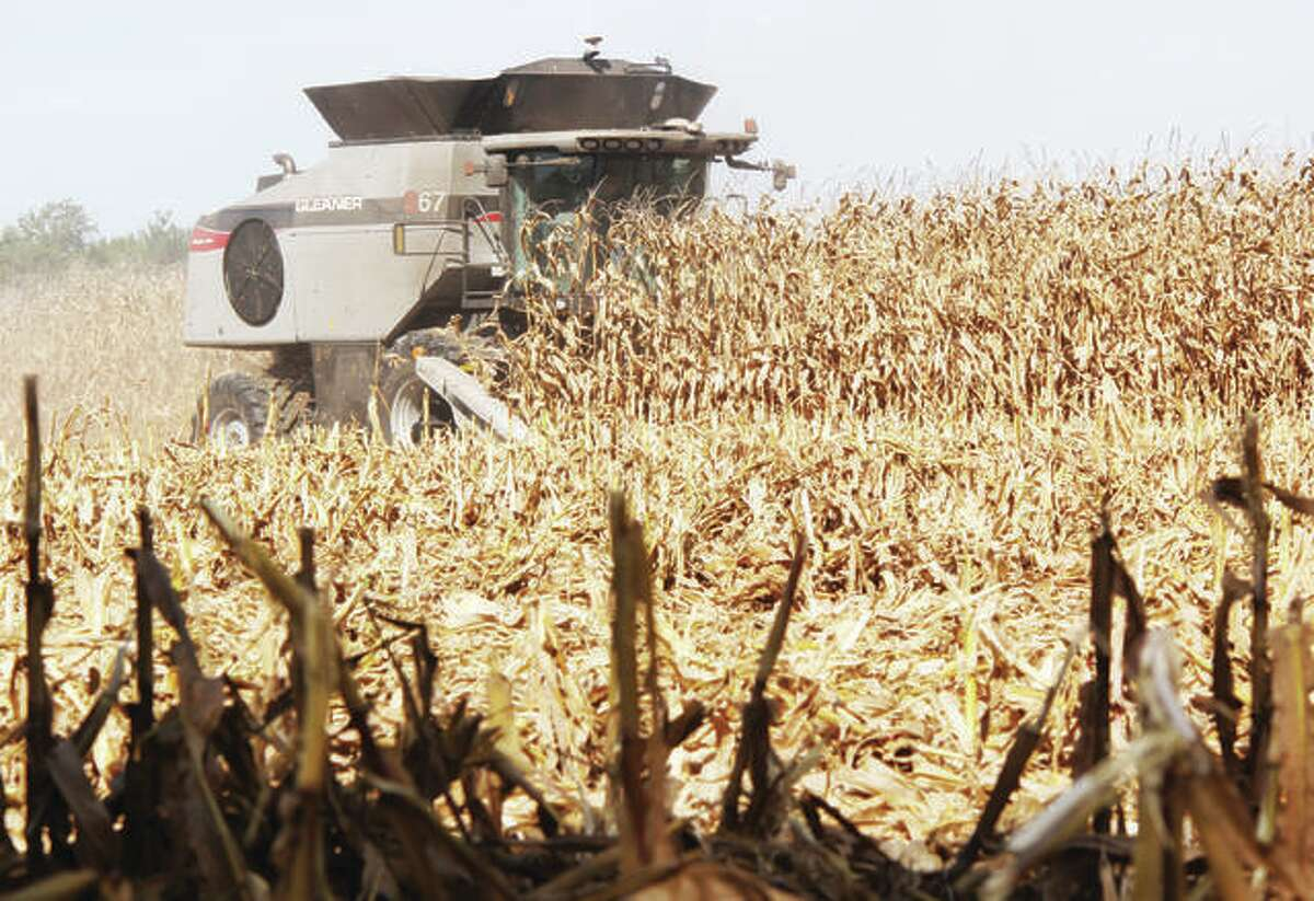 In this Oct. 1, 2020 file photo, a combine cuts through a field of corn near St. James Drive north of Edwardsville.