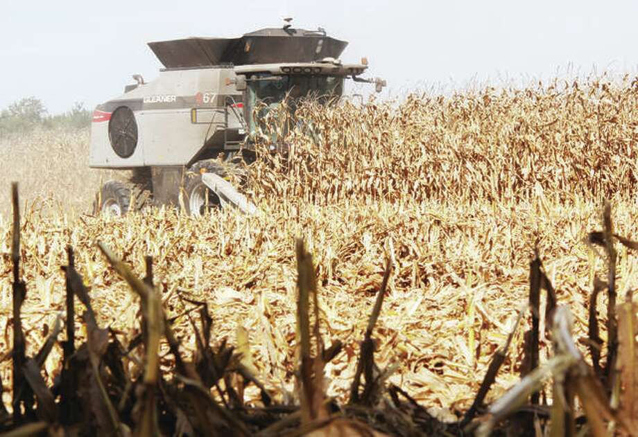 In this Oct. 1, 2020 file photo, a combine cuts through a field of corn near St. James Drive north of Edwardsville. Photo: Scott Cousins | Hearst Newspapers