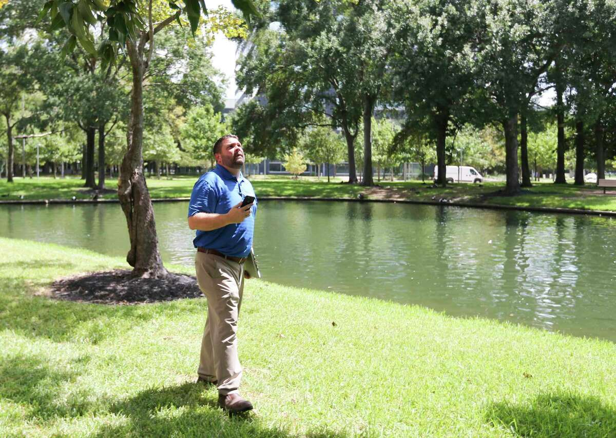 Matt Petty of Davey Tree, looks at a pecan tree with fallen branches in Houston in this file photo.