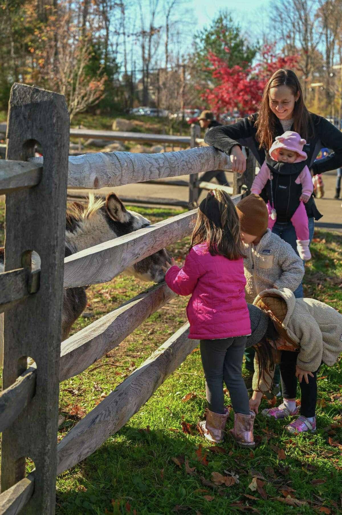 The Stamford Museum & Nature Center holds its final Fall Family Fest of the season, Sunday, Nov. 8.