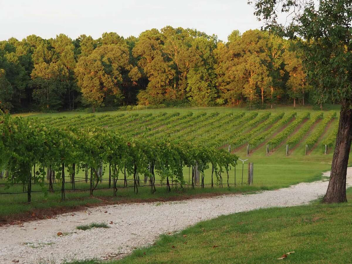 The vineyard at West Sandy Creek Winery near Huntsville.