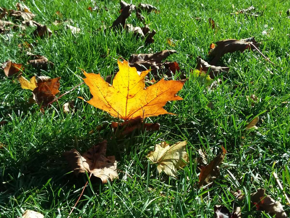Leaves may be starting to fall in the city of Manistee, but there are still many colors to see.