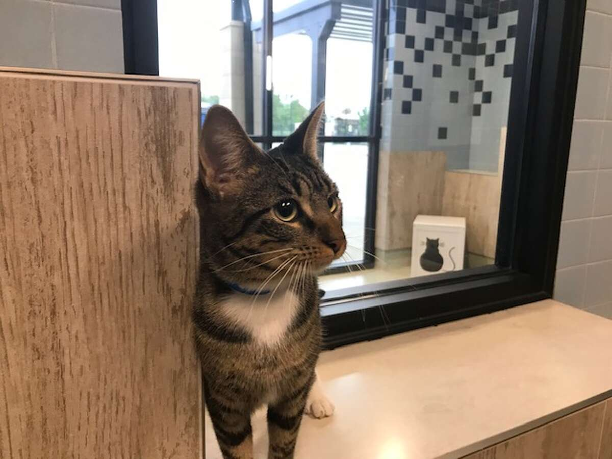 The Houston Society for the Prevention of Cruelty to Animals (SPCA) will reopen its adoption center and allow visitors back in for in-person appointments next month.