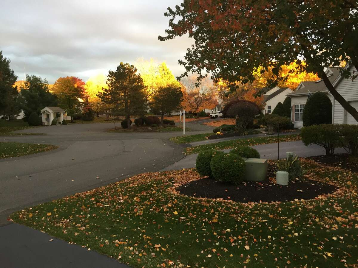 Setting sun turned the trees on fire, by Sidney Legg, Troy.