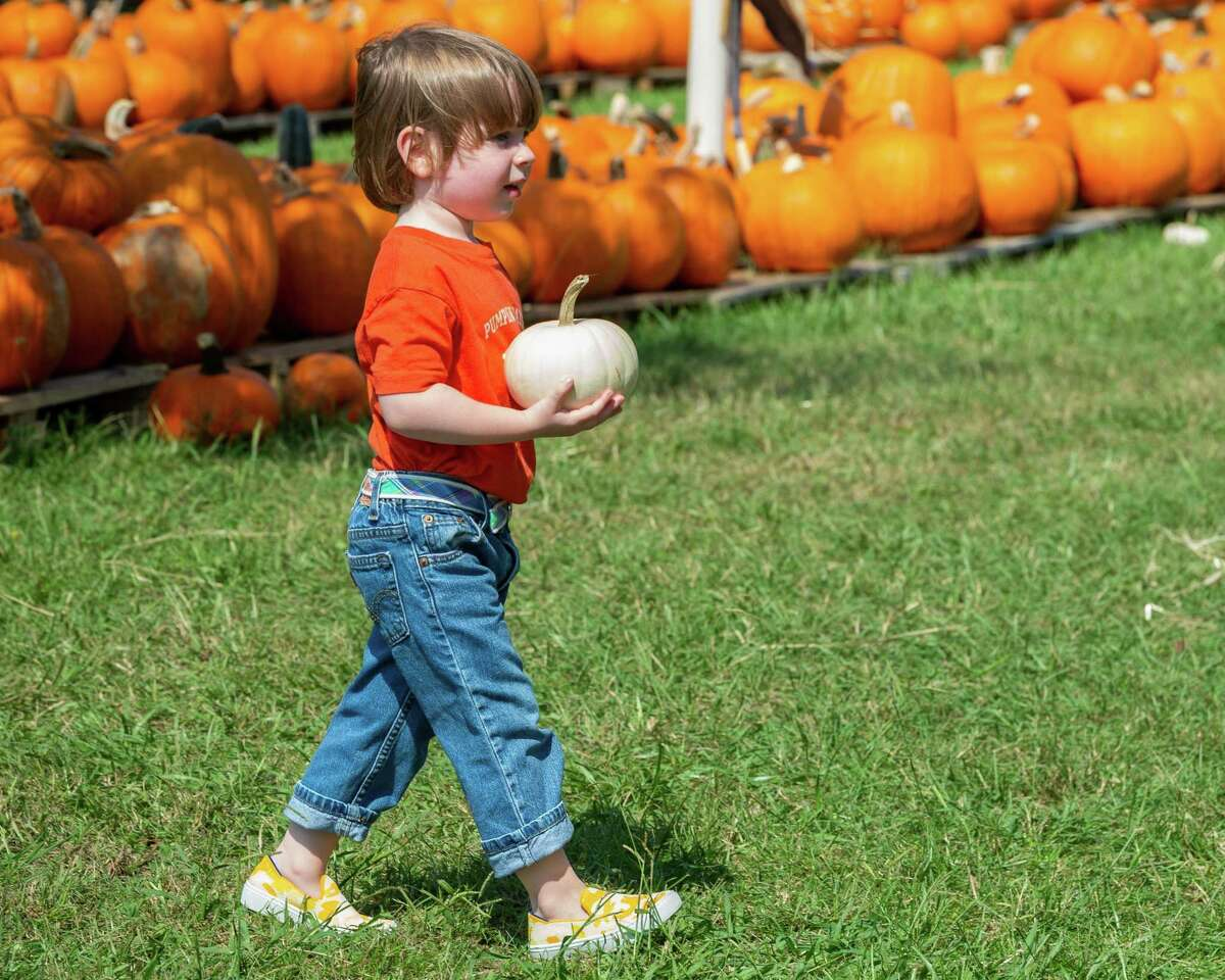Three-year-old Arthur Goodman brings a pumpkin to show his parents. The Pumpkin Patch at Wesley United Methodist Church opened for the season on Sunday at noon. They have a variety of pumpkins and various stations visitors can use for making fall-themed family photos while shopping. The pumpkin patch is open until October 31st, Mondays-Fridays 4pm-8pm, Saturdays 9am-8pm, and Sundays 12pm-8pm. The pumpkin patch is located at the intersection of Major and Folsom Drives in Beaumont. Photo made on October 11, 2020. Fran Ruchalski/The Enterprise