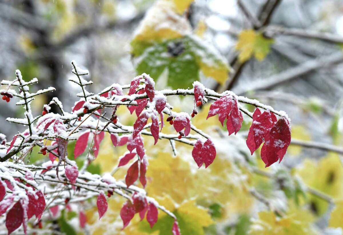 Falls colors are highlighted with snow as the first snowfall of the season arrives in the Capital Region on Friday morning, Oct. 30, 2020, in Delmar, N.Y. (Will Waldron/Times Union)