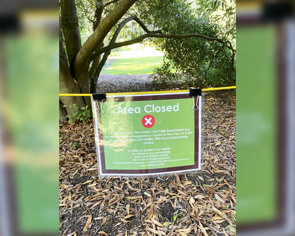 The San Francisco Recreation and Parks Department roped off the Conifer Lawn in the San Francisco Botanical Garden after a coyote came within inches of a child on Oct. 13, 2020.