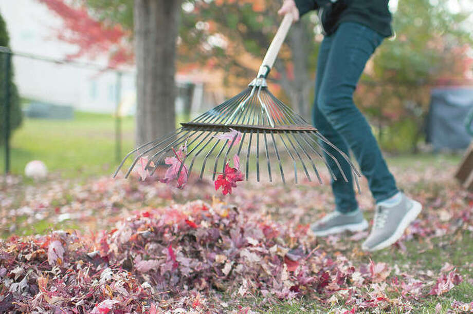 There are other options for leaves than sending them to a landfill or burning them. Photo: Getty Images