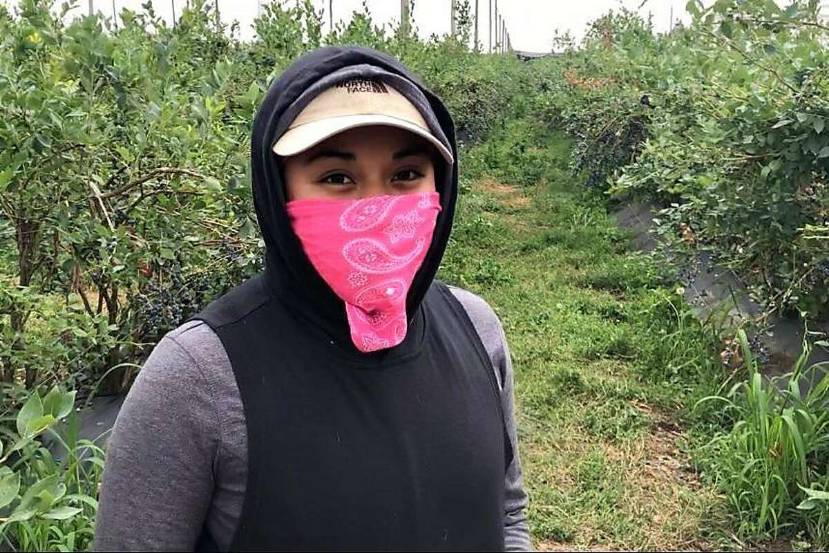 Stanford medical student Gianna Nino-Tapias works on farms in eastern Washington after life changed during the pandemic.