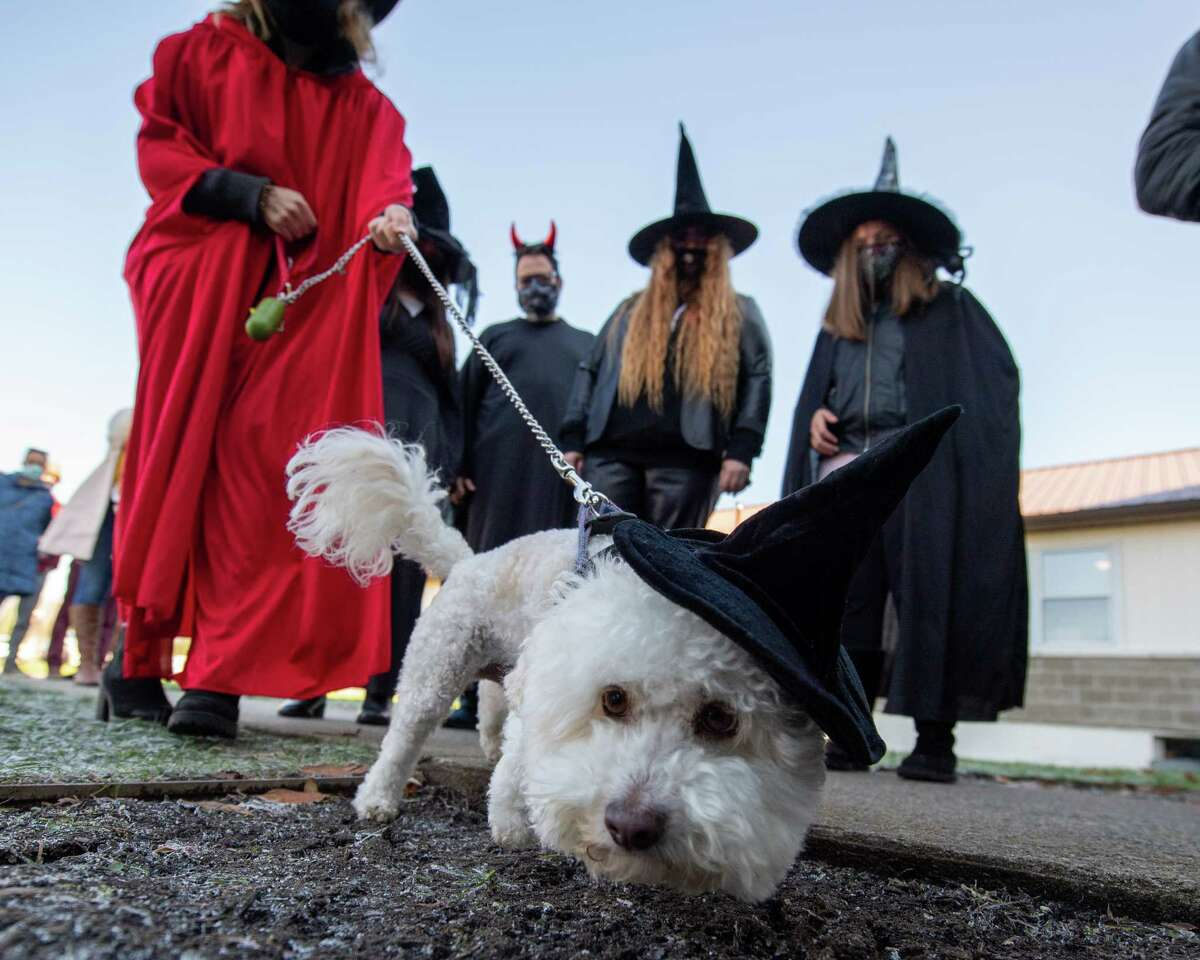 Moose prior to his owner Molly Dunn and her friends, who dressed as witches for Halloween, cast their ballots at Gavin Park in Saratoga, NY, on Saturday, Oct. 31, 2020 (Jim Franco, special to the Times Union.)