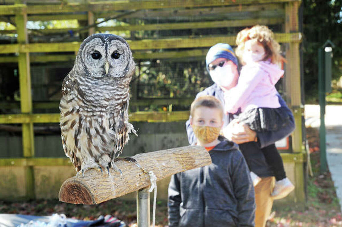 Chili the barred owl is the center of attention for the McKinney family, of Edwardsville, including Nolan, 9, and Vail, 2, at the Owl-O-Ween event at TreeHouse Wildlife Center.